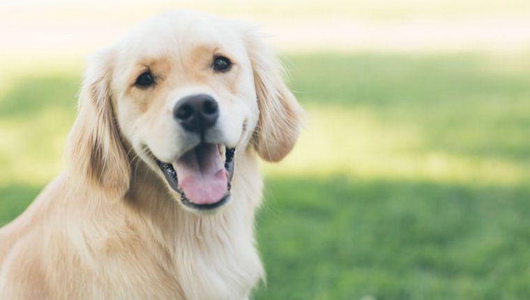 Cães de rua são especialistas em compreender humanos, segundo estudo