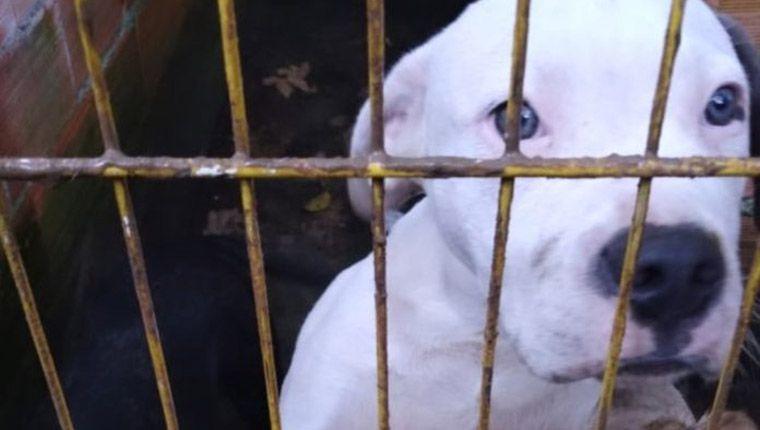 Cães eram explorados para venda, mas foram resgatados após denúncia