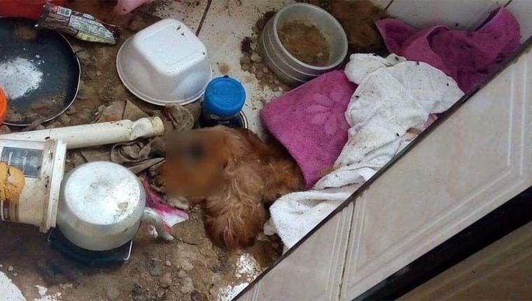 Filhote de cão é encontrado morto de fome e sede após ser abandonado em apartamento