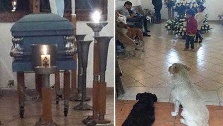 Cães de rua aparecem no velório de mulher que os alimentava