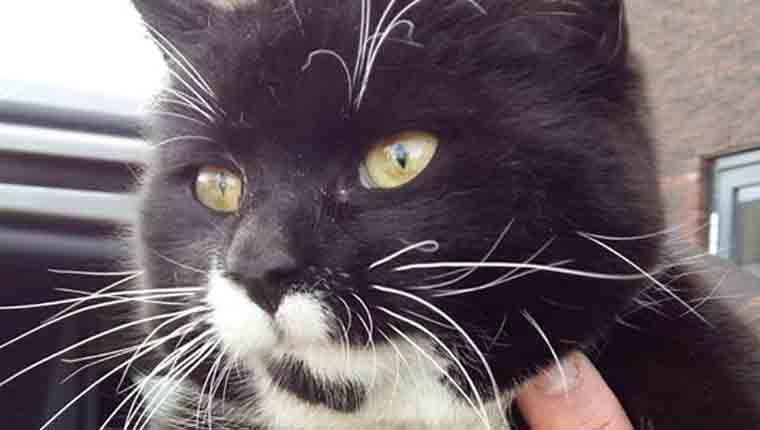 """Gato viaja mil quilômetros sem querer entre Áustria e Holanda após """"carona"""" em caminhão"""
