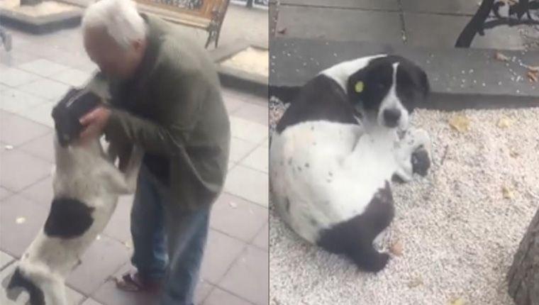 Emocionante: idoso reencontra cão perdido após três anos de buscas (vídeo)