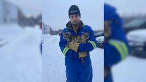 Homem usa café quente para salvar gatinhos que estavam congelados ao chão por horas