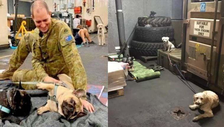 Marinha australiana abriga cães, gatos e outros pets sobreviventes de incêndios