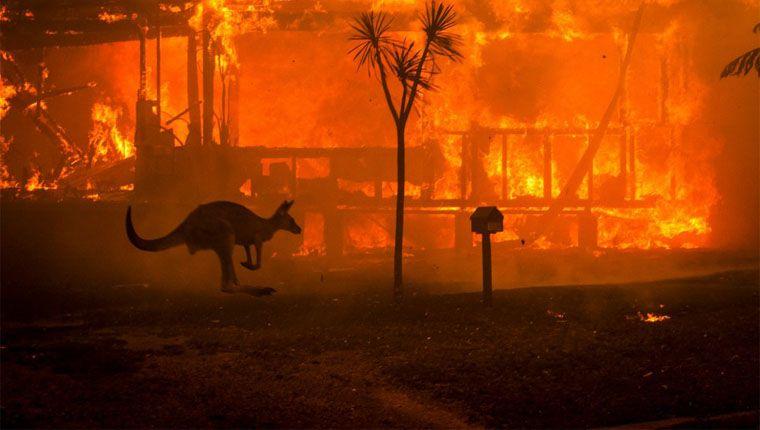 Mais de 500 milhões de animais morreram em incêndios na Austrália