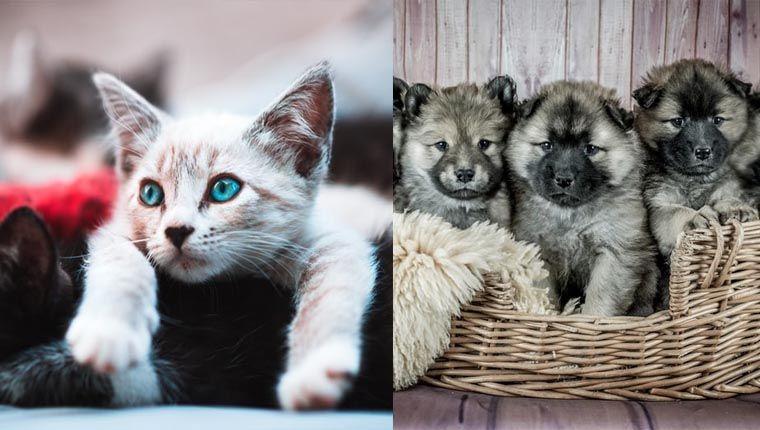 Reino Unido proíbe venda de filhotes em pet shops