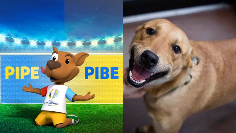 Vira-lata caramelo foi eleito mascote da Copa América 2020