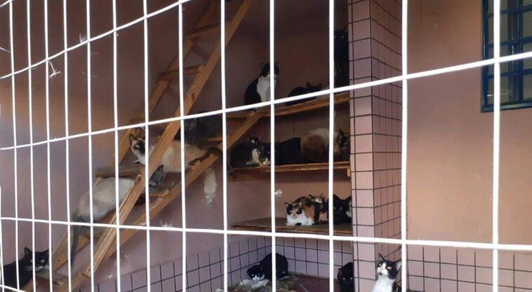 380 gatos foram resgatados em situação de maus-tratos em Ponta Grossa (PR)