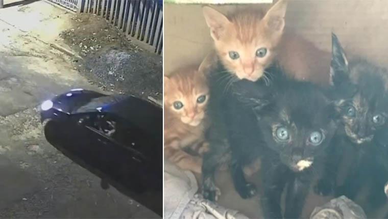 Câmera flagrou abandono de gatos em represa