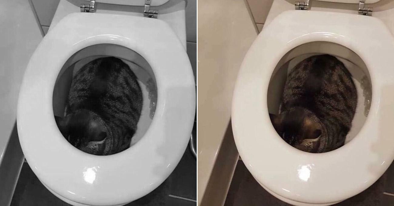Comportamento dos gatos: Dona procura gato desesperadamente e o encontra escondido dentro da privada