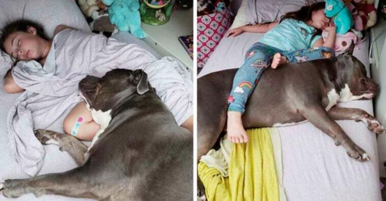 Conexão entre menininha e pitbull é tão grande que só dormem bem se estiverem juntos