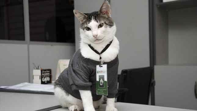 Gato gerente faz lucro de loja triplicar