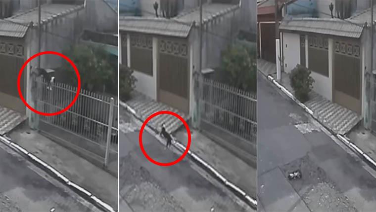 Homem arremessa cachorro por cima do portão em vídeo revoltante