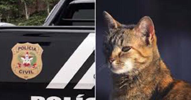 Homem foi indiciado por matar 25 gatos e um cachorro em Joinville