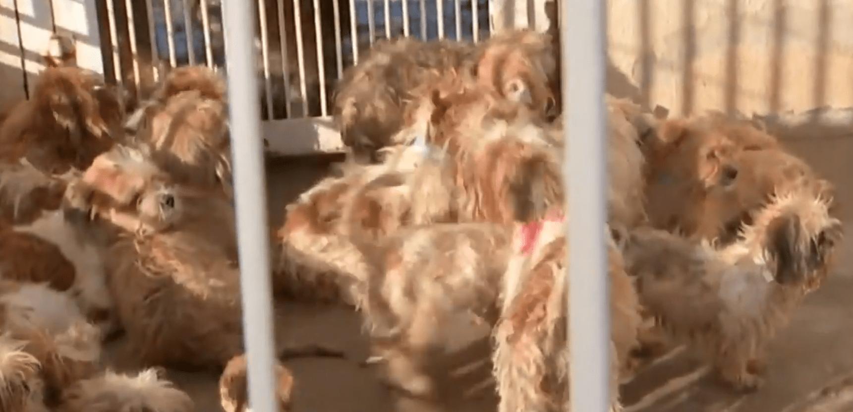 Cãezinhos foram encontrados em gavetas de canil clandestino após denúncia