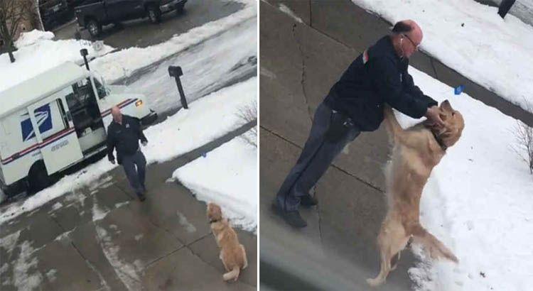 Cachorro golden espera carteiro todos os dias para trocar abraços