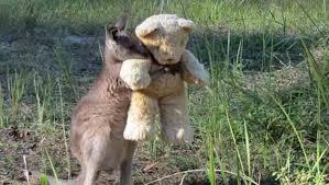 Canguru bebê órfão abraçando ursinho de pelúcia comove e viraliza na internet