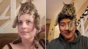 Comportamento dos gatos: Freddy, o gato que acha que é um chapéu