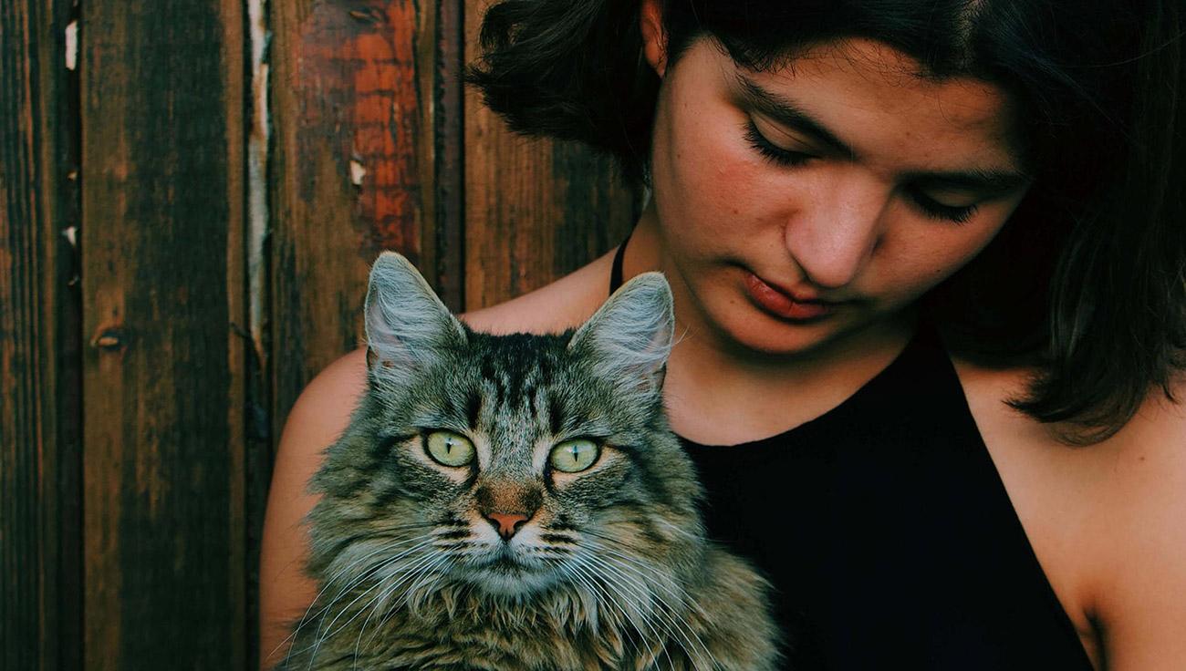 Donos de gatos são mais inteligentes? Cientistas dão a resposta
