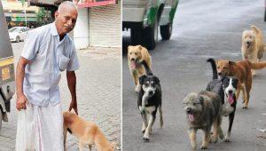 Idoso de 72 anos acorda às 3h30 todos os dias para cozinhar e alimentar cães abandonados