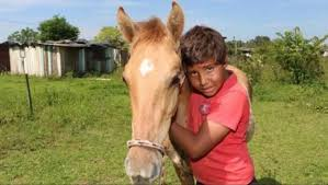 Menino pede milho de Natal ao Papai Noel para alimentar cavalo
