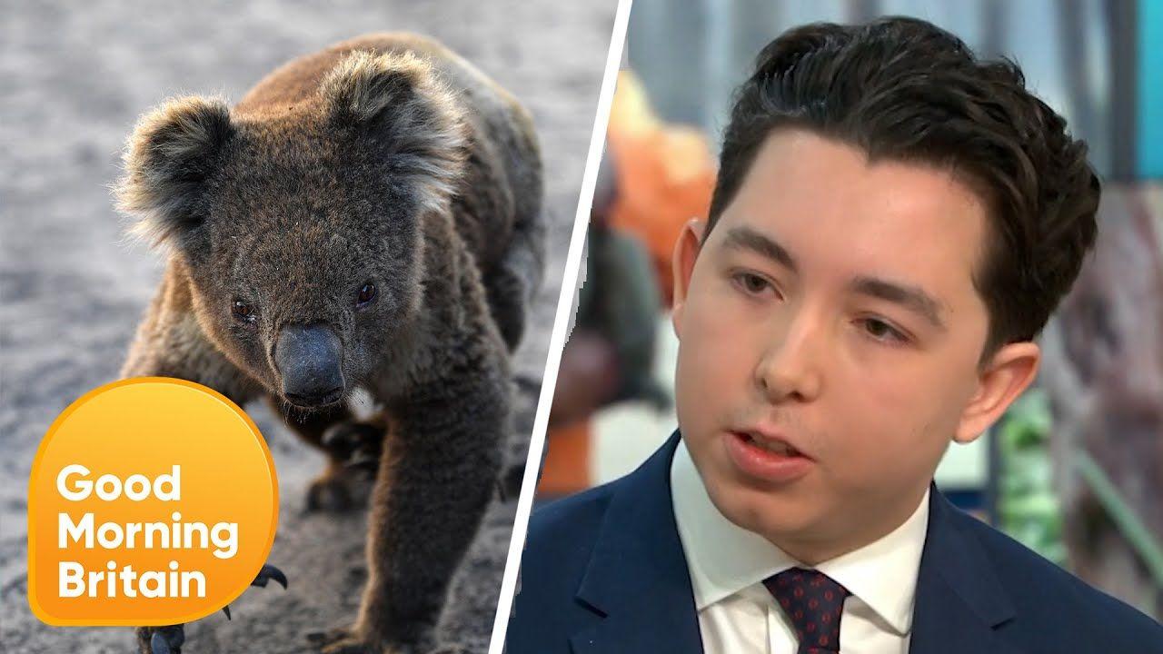 Jovem empresário sugere venda de peles de coalas mortos em incêndios e é criticado