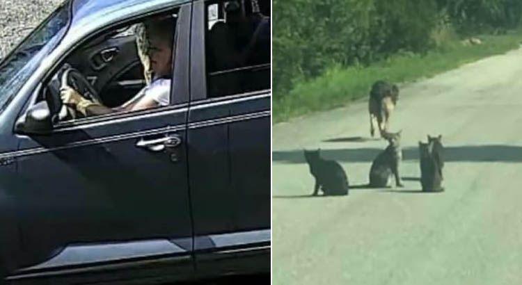 Câmera flagra mulher abandonando 10 gatos e um cão idoso em estrada