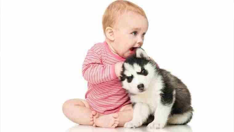 Bebês que convivem com cães são mais saudáveis, afirma estudo