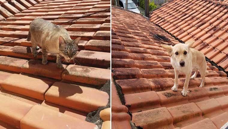 """Cachorro sobe no telhado e gato reclama: """"aqui é meu lugar"""""""
