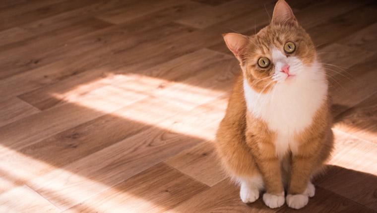 Como distrair seu gato – 5 truques para mantê-lo ocupado