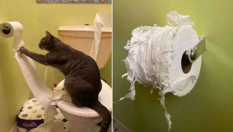 Gata destruidora de papel higiênico