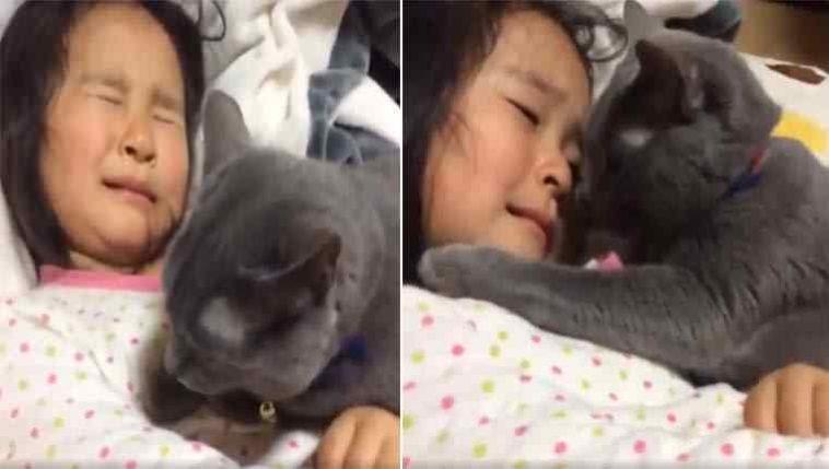 Gato consola menina que está chorando