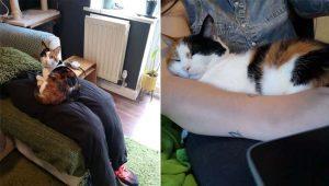"""Casal cria """"colo falso"""" para distrair gatinha carente enquanto trabalham"""