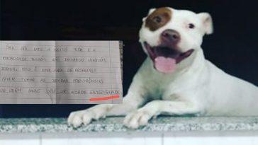 vizinho ameaça envenenar cachorro em Botucatu