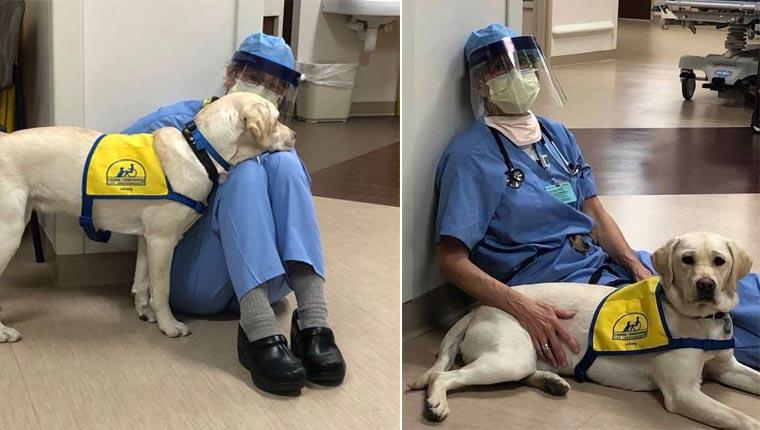 Cão terapeuta conforta médicos e enfermeiros durante crise