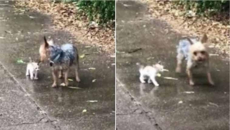 Cachorrinha sai para passear e volta com gatinho que ela adotou no caminho