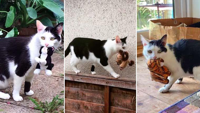 Gata decide que seus brinquedos devem participar das aventuras pelo quintal