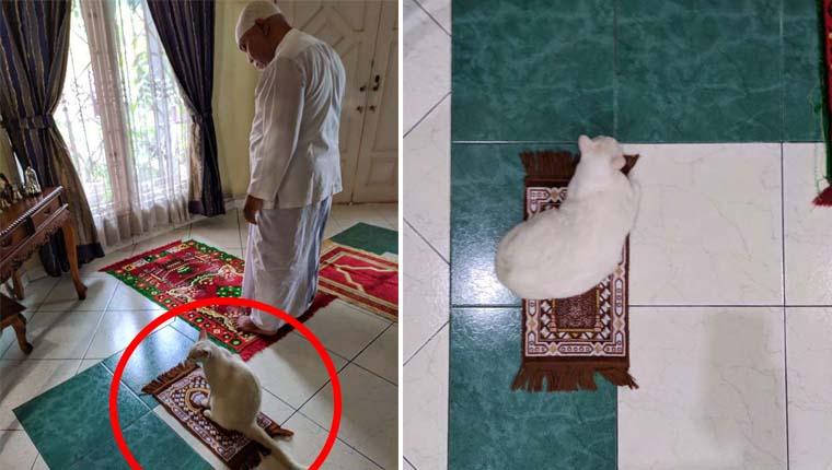 Gata ganhou pequeno tapete para poder rezar com a família que a adotou