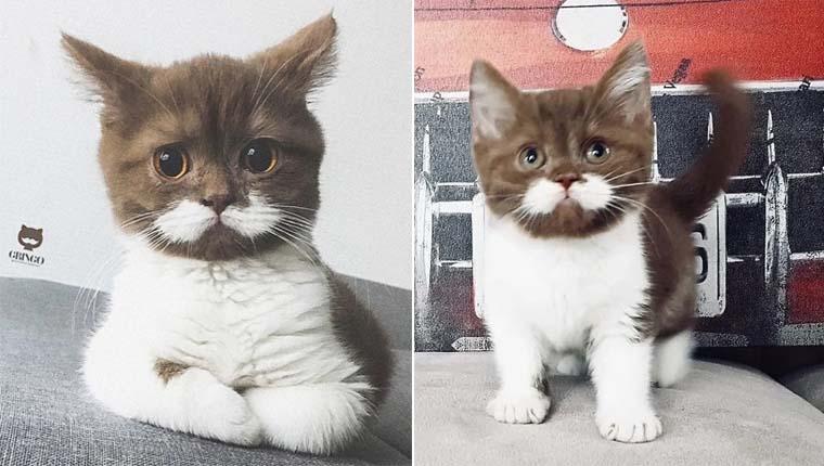 Gatinho com bigode perfeito conquista casal e ganha família