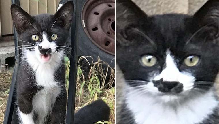Gatinho com marca no nariz em formato de gatinho faz sucesso