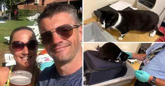 Gatinha sem vergonha tentou viajar escondida na mala dos donos