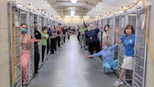 Voluntários de abrigo comemoram adoção de todos os animais pela primeira vez