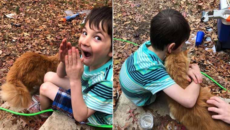 Gato aparece à porta de menino cujo gato tinha morrido e reação emociona