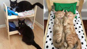 Pessoas estão comprando camas de boneca para seus gatinhos