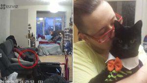 Gatinho fantasma é flagrado por câmera da dona um ano após a morte