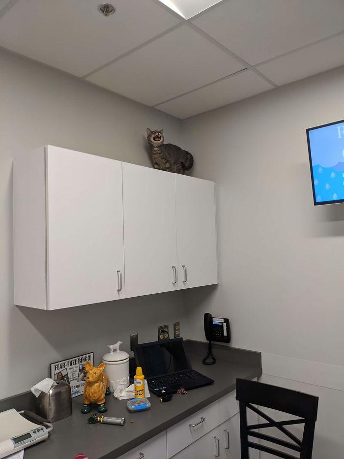 fotos de gatinhos gritando em casa