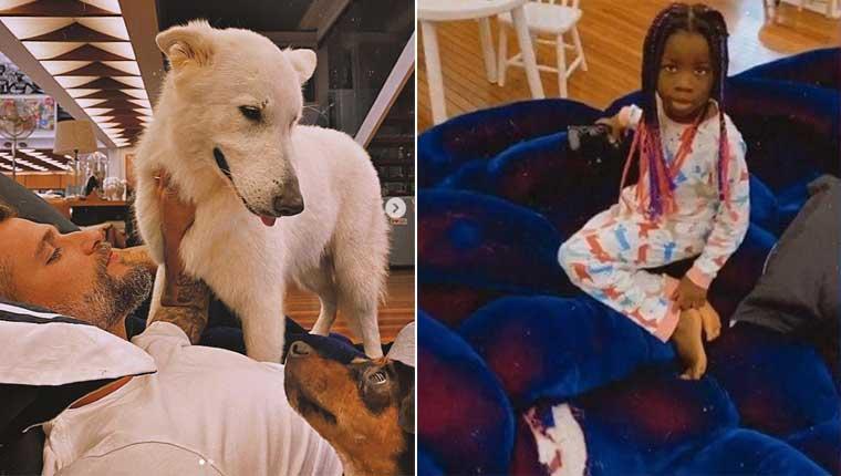 Cachorro de Bruno Gagliasso destruiu sofá de R$ 500 mil