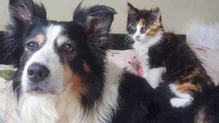 Cadela adota gatinha idêntica a ela e agora são inseparáveis