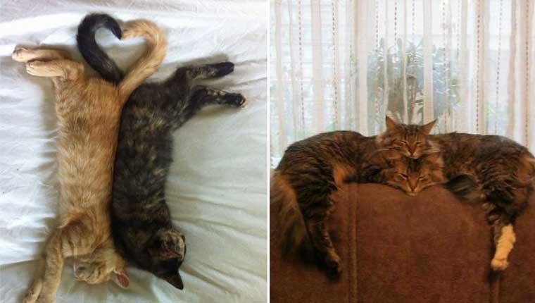 Donos registraram seus gatinhos dormindo em posições fofas