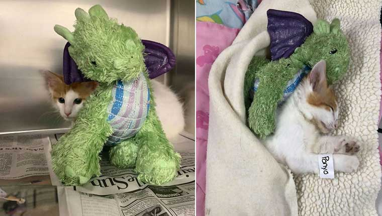 Filhote leva seu dragão de pelúcia ao veterinário para se sentir seguro